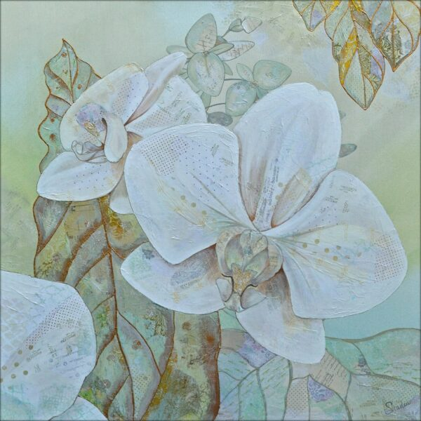 Orchids In White -  1