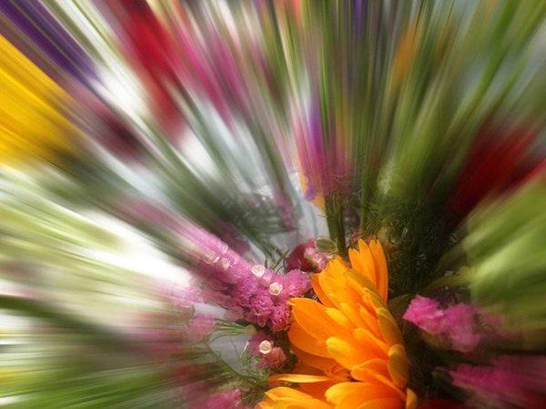 Scherf floral flash