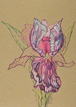 Proud-Iris-Floral-Color-Drawing
