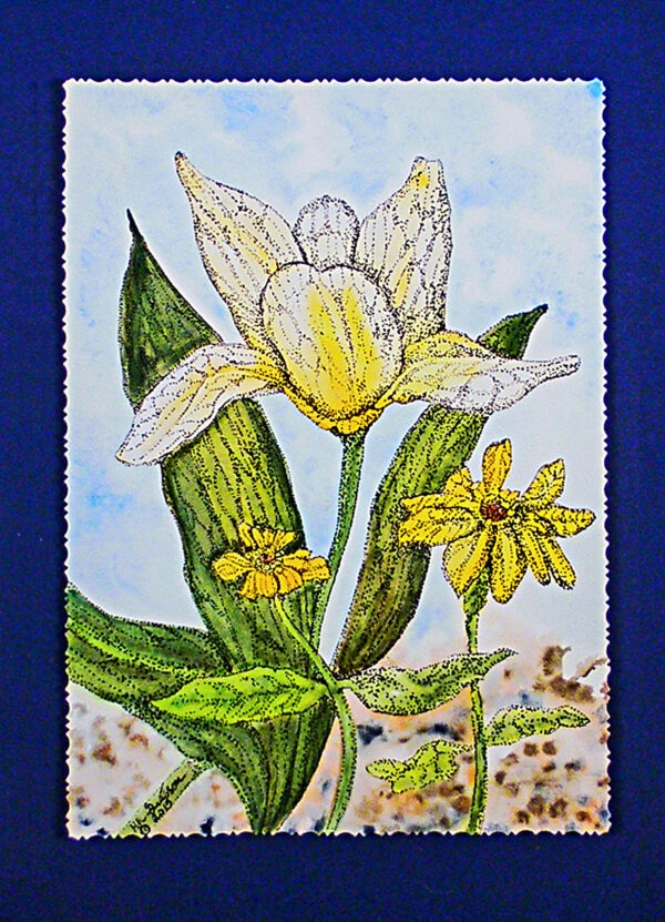 Dutch-tulip-watercolor-deckled-matted