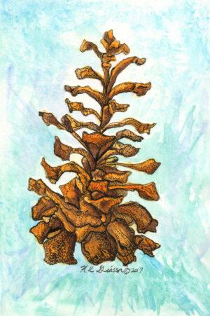 Winter-pine-cone-iii-botanical-watercolor-painting