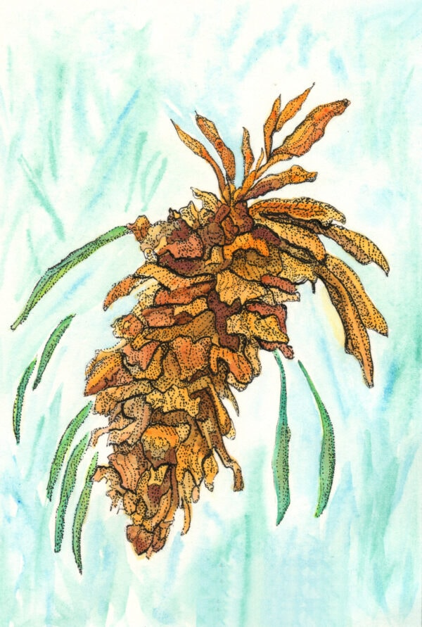 Winter-Pine-Cone-Iv-Botanical-Watercolor-Painting