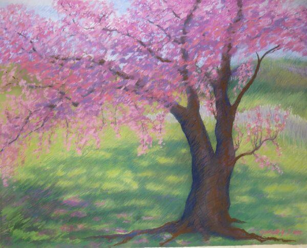Cherry Tree -  1