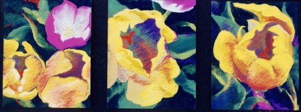 Tulip Triptych Copy -  1