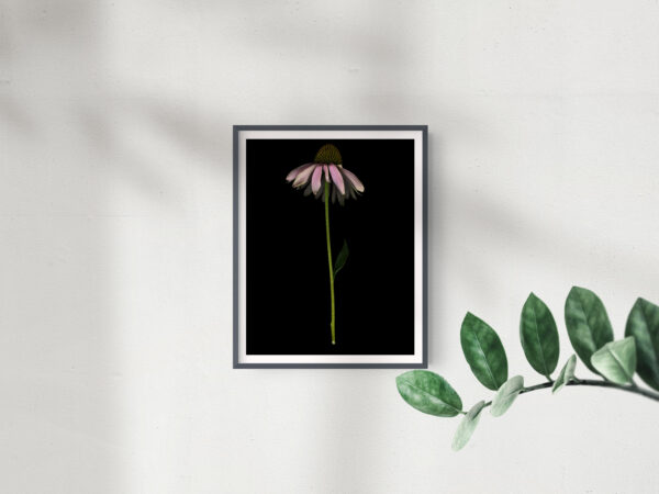 Frame Mockup_Single Echinacea -  2