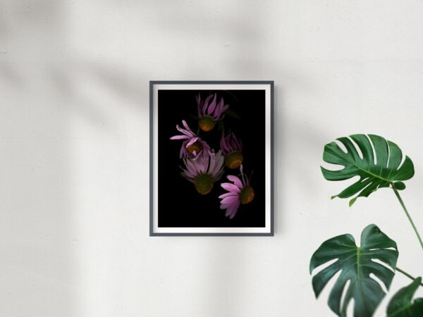 Frame Mockup_Single Echinacea Group -  2