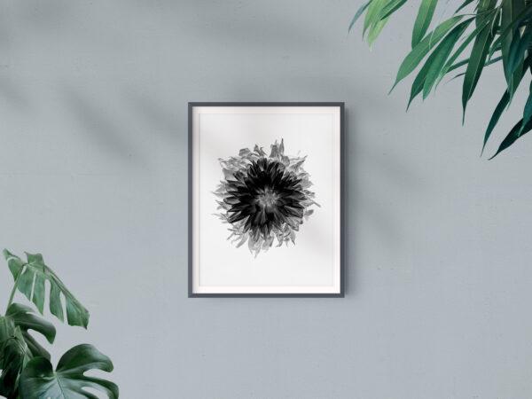 Frame Mockup_Single Grey Dahlia -  2