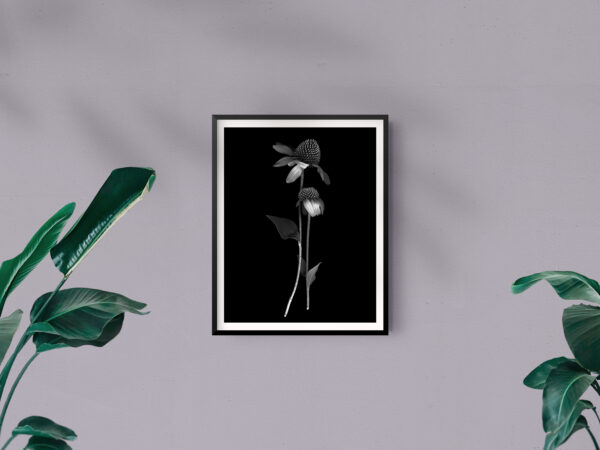 Frame Mockup_Single Hugging Dahlias -  2