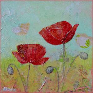 Spring Poppy I